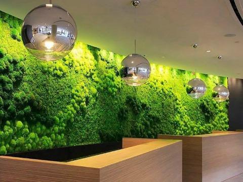 Toits Vertige. Mur vert intérieur pour espace bureau Montréal.